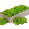 Plante Carrefour – Online Catalog