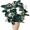 Plante De Interior Carrefour 2020