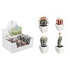 Cactus ikea – Catalog online
