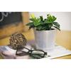 Pret Phalaenopsis Ikea