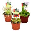 Planta carnivora ikea – Cea mai bună selecție online