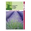 Bulbi flori Lidl – Cea mai bună selecție online