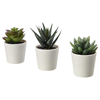 Plante decorative Lidl – Online Catalog